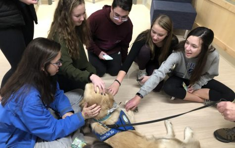 Furry Visitors Highlight Stress Less Week