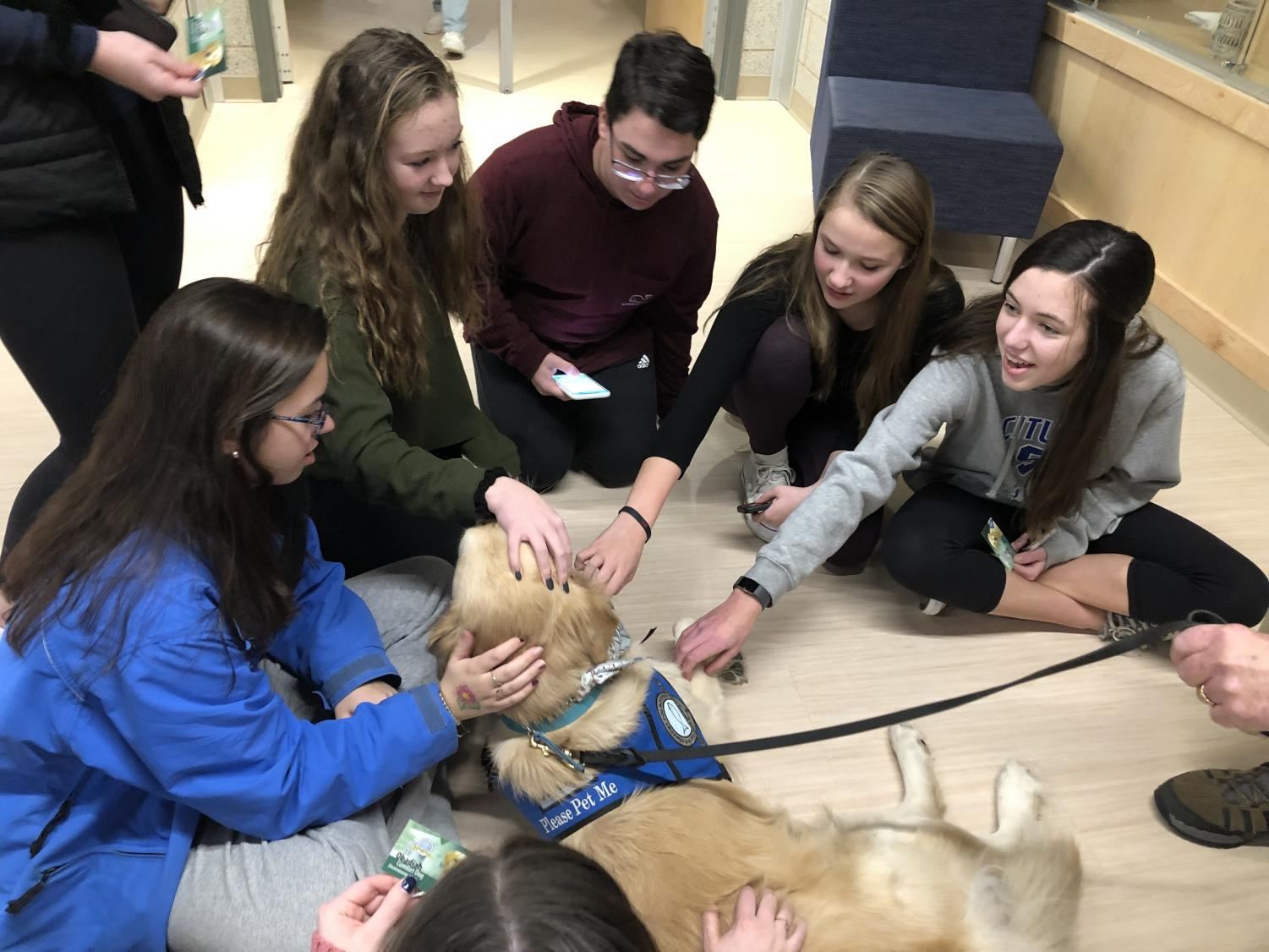 SHS students enjoy time with comfort dogs during Stress Less Week.