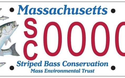 New Striped Bass License Plate Will be Available in MA