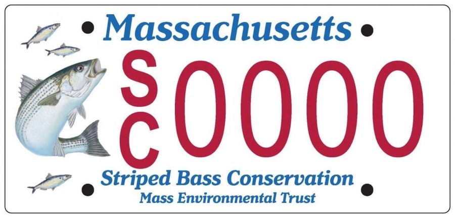 New+Striped+Bass+License+Plate+Will+be+Available+in+MA
